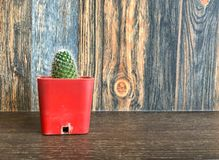Petit cactus dans le pot sur l'étagère pour la décoration à la maison Images libres de droits