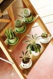 Petit cactus dans un bac Images libres de droits