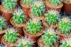 Petit cactus dans un bac Photographie stock libre de droits