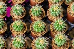Petit cactus dans un bac Image libre de droits