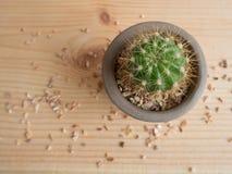Petit cactus dans un grand monde Image stock