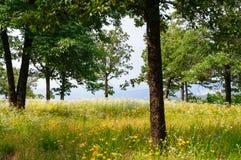 Petit Cajgowy stanu park Fotografia Royalty Free