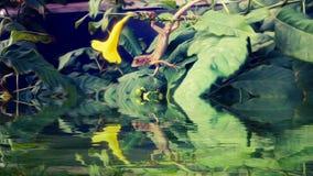 Petit caméléon Photo libre de droits