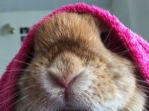 Petit capot rose de lapin Image stock