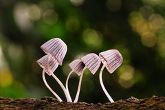 Petit champignon Photo stock