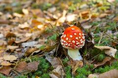 Petit champignon Photographie stock libre de droits