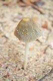Petit champignon Image libre de droits