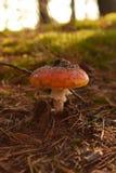 Petit champignon couvert de terre photographie stock