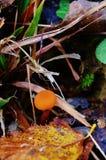 Petit champignon de couche Photo libre de droits