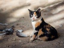 Petit chasseur doux de chat Image stock