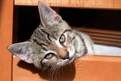 Petit chat Photo libre de droits