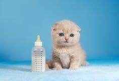 Petit chat Photo stock