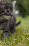 Petit chat Image stock