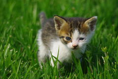 Petit chat Images stock