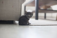 Petit chat photographie stock