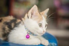 Petit chat blanc Image libre de droits