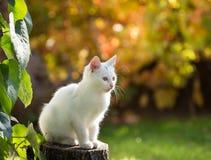 Petit chat blanc dans le jardin image stock