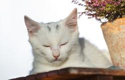 Petit chat blanc dormant près de l'usine Photos libres de droits