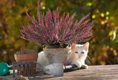 Petit chat blanc jouant sur la table dans le jardin Photos stock