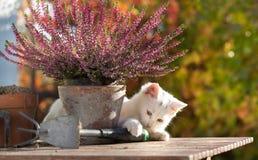 Petit chat blanc jouant sur la table dans le jardin Photographie stock libre de droits