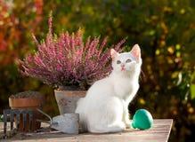 Petit chat blanc près des fleurs dans le jardin Image stock