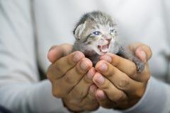 Petit chat dans des mains humaines Images stock