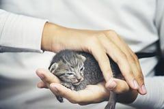 Petit chat dans des mains humaines Images libres de droits