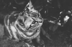 Petit chat dans la photographie noire et blanche Images libres de droits