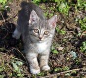 Petit chat dans le jardin Image libre de droits