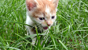 Petit chat de bébé Photos stock