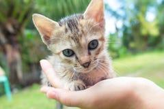 Petit chat de bébé dans la main femelle du ` s Fond de jardin d'été Photos libres de droits