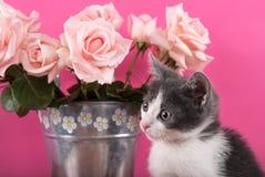 Petit chat de chat posant devant le bouquet des roses dans un pot de fleur Photographie stock libre de droits