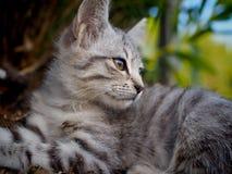 Petit chat de rue en Sicile image stock