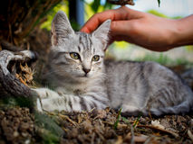 Petit chat de rue en Sicile images stock