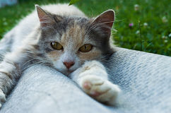 Petit chat drôle Image stock