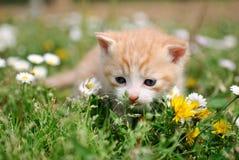 Petit chat entre les fleurs Image libre de droits