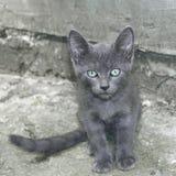 Petit chat gris dehors image libre de droits