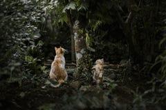 Petit chat mignon Photo stock