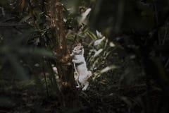 Petit chat mignon Photos libres de droits