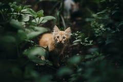 Petit chat mignon Image stock