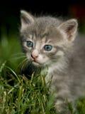 Petit chat mignon Photo libre de droits