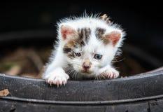 Petit chat mignon de bébé image libre de droits