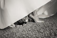 Petit chat mignon se reposant dans un costume sous la robe de jeune mariée photo stock