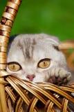 Petit chat mignon sur la nature Photos libres de droits