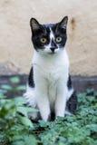 Petit chat observant dans le jardin Photo stock