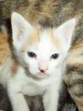 Petit chat près d'appareil-photo Photo stock