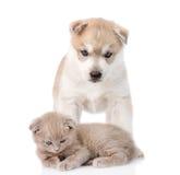 Petit chaton écossais et chiot de chien de traîneau sibérien ensemble D'isolement Photos stock
