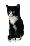 Petit chaton photographie stock