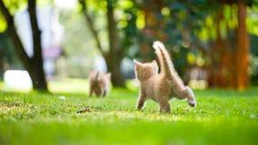 Petit chaton Photos libres de droits