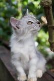 Petit chaton Photo stock